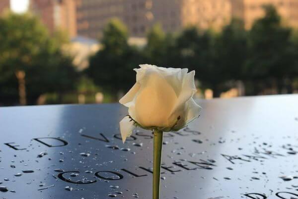 911纪念碑白花